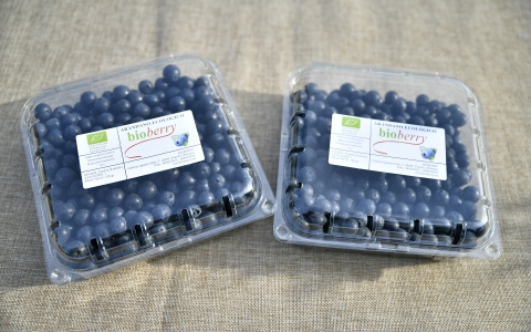 Blueberries in tubs 500g